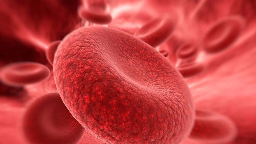Storing Cord Blood