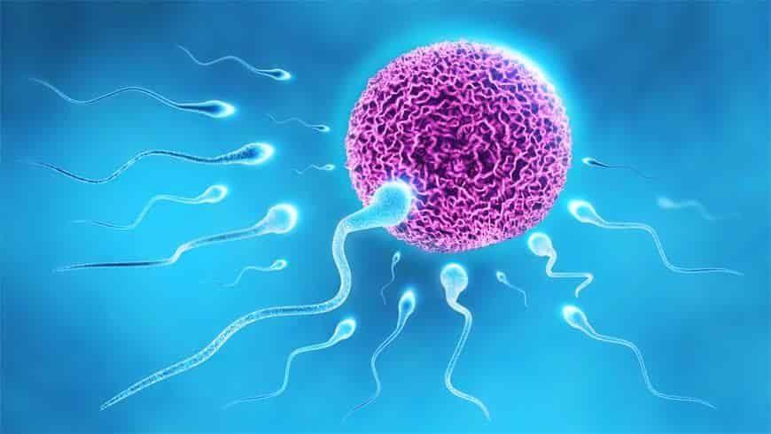 Cyprus Sperm Donation